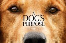 A Dog's Purpose: l'équipe sous enquête pour cruauté animale
