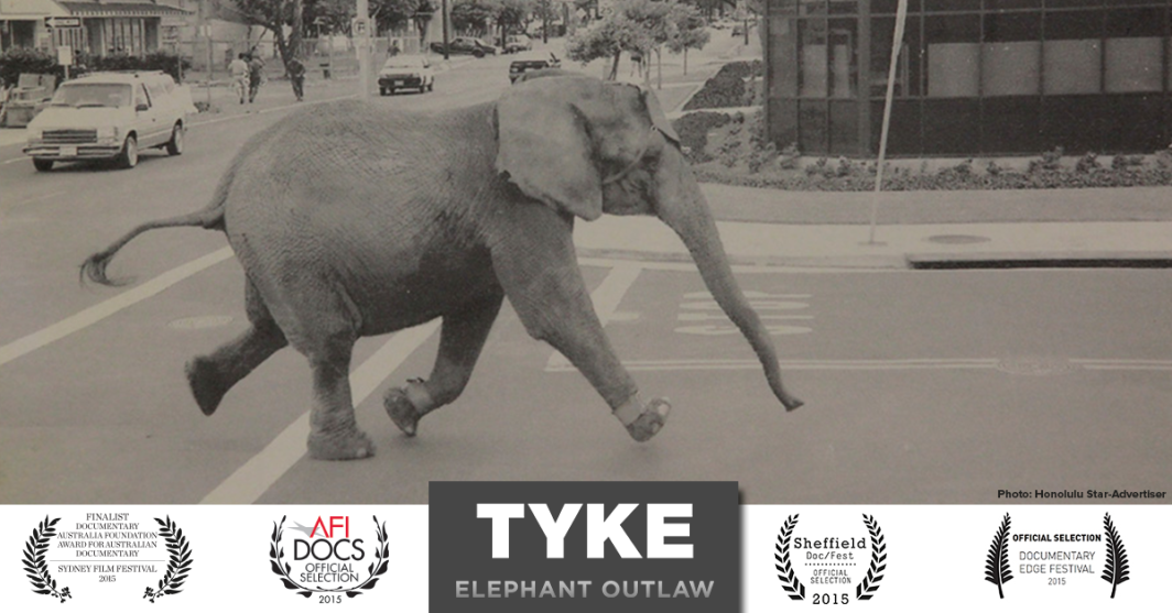 Tyke Elephant Outlaw en primeur chez Netflix
