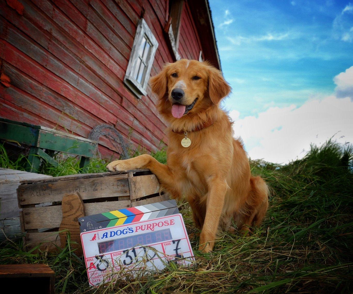 A Dog S Purpose Video Tmz