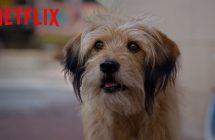 Benji : Netflix fait revivre le sympathique chien de notre jeunesse