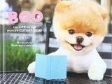 Boo le Pomeranian