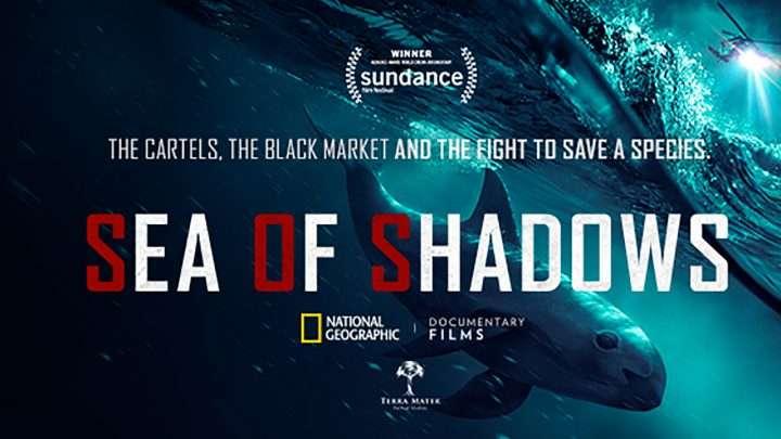 Sea of Shadows: un trailer pour le documentaire choc